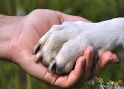 Кучетата правят хората щастливи