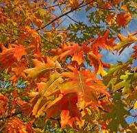 Есента смирено, със стъпки кадифени...