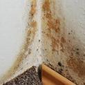 Без паника: Изгонете мухъла от къщата