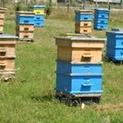 В пчелина: Зазимяване на кошерите