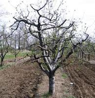 В овощната градина: Настъпва сезонът на активната растителна защита