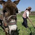Назаем от Дойче Веле: Краят на българското село