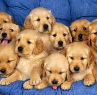 Радост в къщи: Като нямам внучета - гледам кучета