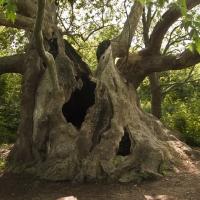 """Десетина дни остават до края на конкурса """"Дърво с корен 2015"""""""