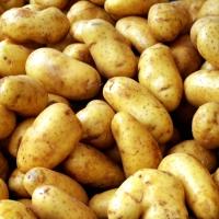 Първият милион: Нашите богаташи и картофите