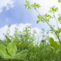 Зелена аптека: Цветя и растения вместо антибиотици