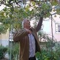 Полезно: Резитби при лоза(видео)