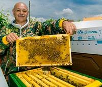 Пчеларят Симеон Тодоров: Боледувам, когато се разболее кошер