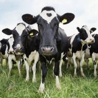Предизвикателство или прокълната орисия е това, което се случва с животновъдите
