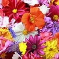 Цветята влияят според зодията