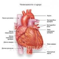 Сърцето е единственият орган, който не боледува от рак