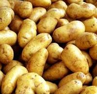 Без картофите нямаше да ги има и Бойко, и Самоковеца, и Иво Прокопиев
