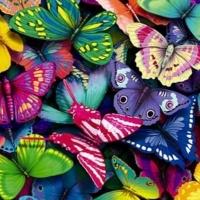 Красотата около нас: Пеперуди, пеперуди…