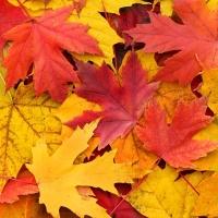 Приказките са край нас: Малка есенна соната