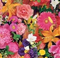 Алтернативен хороскоп: Кое цвете сте според датата на раждане?