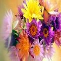 Фън Шуй съветва: Цветята носят успех, ако ги комбинирате добре