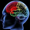 """Учените: Политическите """"ляво"""" и """"дясно"""" се крият в структурата на мозъка"""