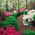 Пролет пукна: Направете градинската пътека цветна