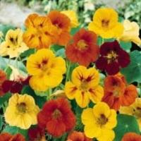 Чалъми: Полезни пролетни съвети за градината