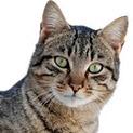 Знаете ли, че: Котките смъкват кръвното на хората