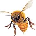 Тревога: Насекомите нападат при силни миризми