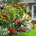 Чалъми: 5 съвета за красива лятна градина