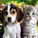 Меракът на внучето: Искам коте, искам куче!