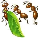 Чалъми: Да прогоним мравките от дома