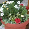 1001 съвети: Какво им трябва на цветята в апартамента?