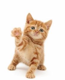 Мъркането дава сила на котките