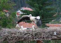 Едно от щъркеловите семейства в двора на бай Тодор. Снимки - вестник