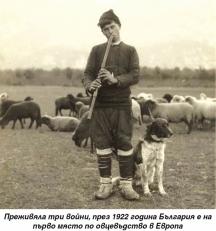 Пасторал - овчар със стадото си.