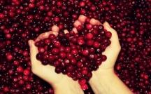 Най-ефикасното билково средство срещу инфекции на пикочния мехур е червената боровинка.